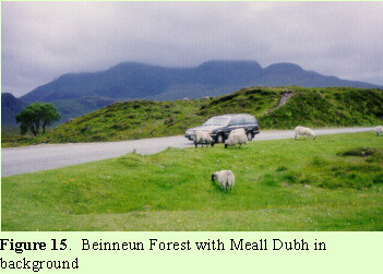 Beinneun Forest with Meall Dubb in background